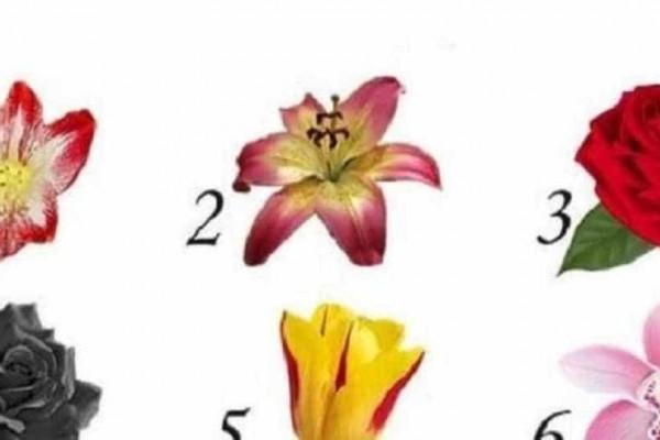 Διάλεξε ένα λουλούδι και μάθε το μυστικό που κρύβει για τον εαυτό σου που δεν γνωρίζεις! - Περίεργα-Funny