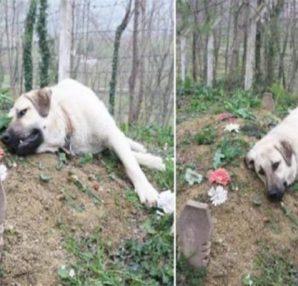 Αυτός ο σκύλος με τη ραγισμένη καρδιά φεύγει κάθε μέρα από το σπίτι για να επισκεφτεί τον τάφο του ιδιοκτήτη του - Περίεργα-Funny