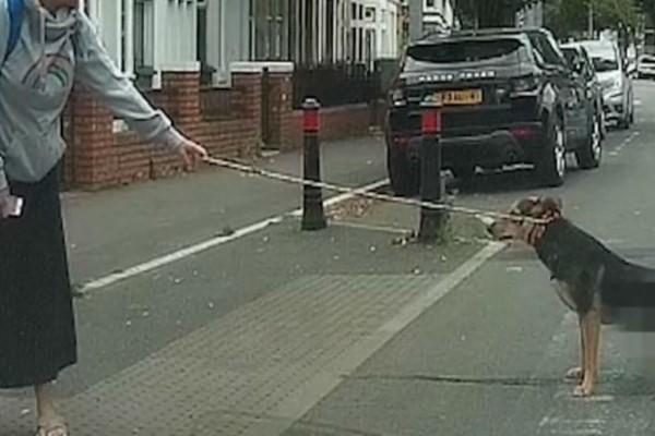 Έβγαλε βόλτα το σκύλο της όταν ξαφνικά σταμάτησε στη μέση του δρόμου - Ο λόγος θα σας αφήσει άφωνους - Περίεργα-Funny