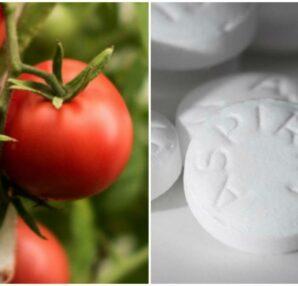 Φύτεψε ασπιρίνες μαζί με τις ντομάτες - Ο λόγος θα σας ενθουσιάσει - Περίεργα-Funny