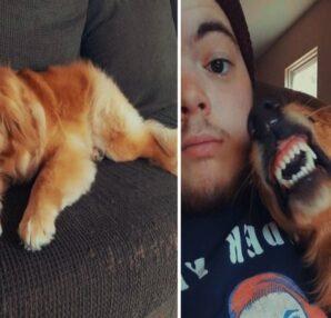 Σκύλος: Νόμιζαν ότι ήταν επιθετικός και αντικοινωνικός, αλλά προσπαθούσε να χαμογελάσει - Ένα αγόρι ήθελε να τον υιοθετήσει - Περίεργα-Funny