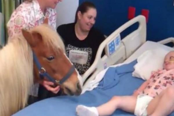 Η ευχή αυτού του άρρωστου παιδιού ήταν να δει από κοντά ένα άλογο - Δείτε τι κάνει το άλογο όταν το πλησιάζει… (video) - Funny-Περίεργα