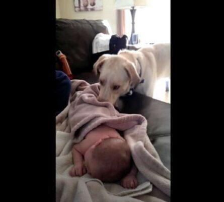 Κάμερα καταγράφει κρυφά τι κάνει ο σκύλος ενώ το μωρό κοιμάται - Δείτε στο 0:04 και θα πάθετε σοκ - Funny-Περίεργα