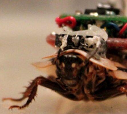 Κατσαρίδες «cyborg» θα σώζουν στο μέλλον... ζωές – Δείτε πώς θα μπορούσαν να γίνουν μέλη της ΕΜΑΚ! - Funny-Περίεργα