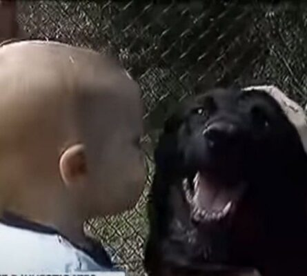 Ο σκύλος γάβγιζε στην babysitter και ο πατέρας έβαλε κάμερα - Δεν φαντάζεστε τι ανακάλυψε (video) - Funny-Περίεργα