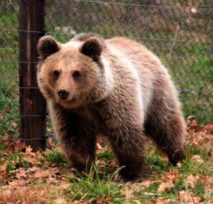 Αγώνας με μια αρκούδα: Το ανέκδοτο της ημέρας (09/07) - Funny-Περίεργα