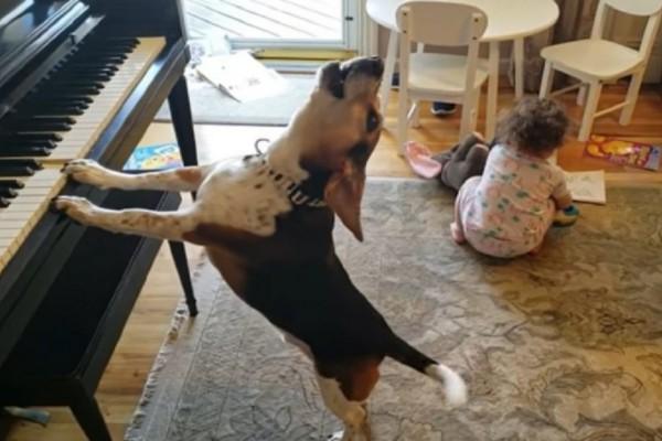 Σκύλος παίζει στο πιάνο και το κοριτσάκι χορεύει - Το βίντεο που έχει σαρώσει με 15.400.000 προβολές - Funny-Περίεργα